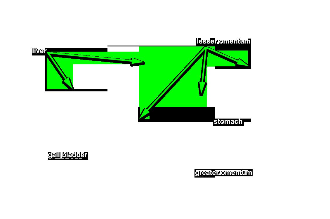 Anatomy Pathways Digestive System